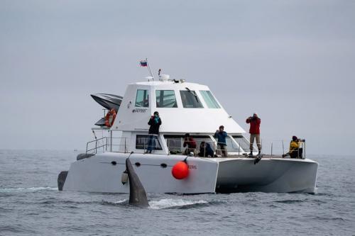סנפיר של אורקה (קטלן) ליד היכטה בהפלגה למפרץ רוסקאייה, קמצ'טקה - Wild Travel