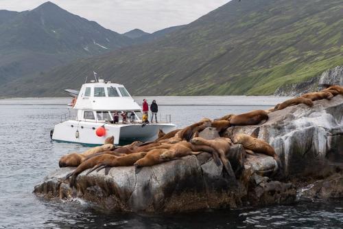 אריות ים בהפלגה למפרץ רוסקאייה, קמצ'טקה - Wild Travel