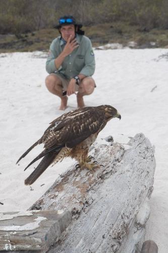 נץ גלפגוס והמדריך המקומי, איי גלפגוס - Wild Travel