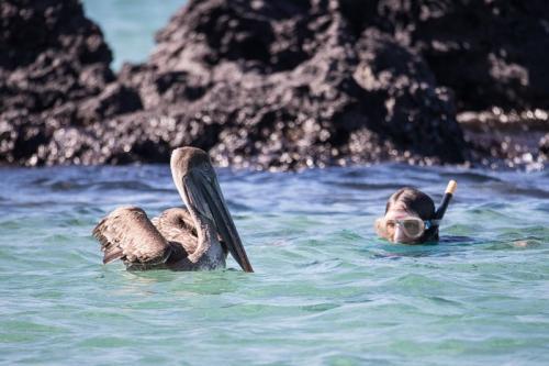 שקנאי אמריקאי ליד המטיילים, איי גלפגוס - Wild Travel