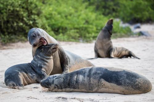 אריות ים על החוף, איי גלפגוס - Wild Travel