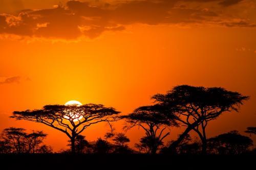 שקיעה אפריקאית בסרנגטי, טנזניה - Wild Travel