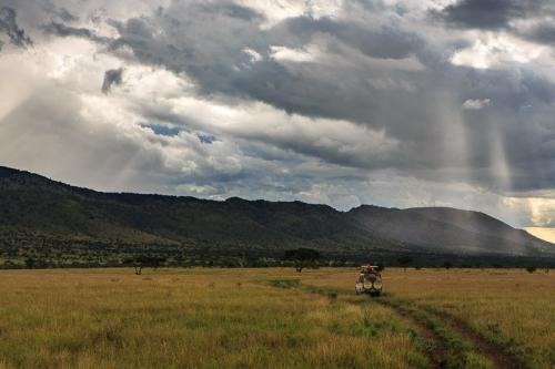 ג'יפ חוצה את הסוואנה בסרנגטי, טנזניה - Wild Travel